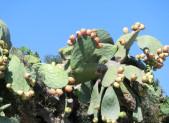 Malte-Gozo-châleur